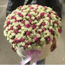 Розы Кустовые 12