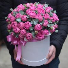 Розы Кустовые 13