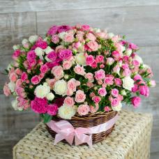 Розы Кустовые 15