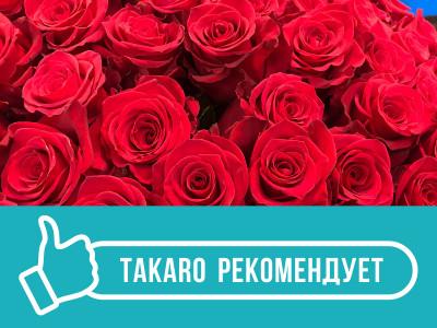 В чем отличие роз из Кении и Эквадора? Смотрим, нюхаем и трогаем!
